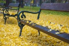 Banco nel parco di autunno Immagini Stock Libere da Diritti