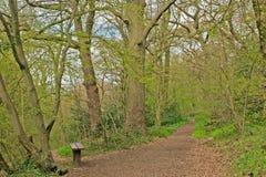Banco nel terreno boscoso di primavera Immagini Stock
