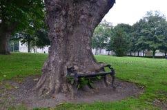 Banco que come el árbol Fotografía de archivo