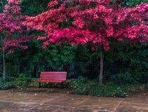 Banco rojo bajo colores de la caída en un día lluvioso fotografía de archivo libre de regalías