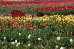 Banco rojo en tulipanes Foto de archivo libre de regalías