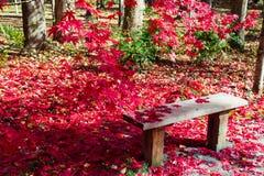 Banco romântico coberto nas folhas de bordo vermelhas na queda imagens de stock royalty free