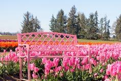 Banco rosado en Tulip Farm imágenes de archivo libres de regalías