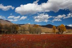 Banco rosso dell'erba Fotografia Stock Libera da Diritti