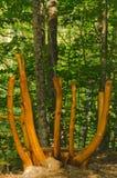 Banco scolpito dell'albero in foresta Immagini Stock