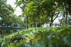 Banco sob a árvore nos jardins botânicos em Chiangmai Tailândia fotos de stock