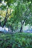 Banco sob a ?rvore nos jardins bot?nicos em Chiangmai Tail?ndia fotografia de stock