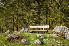Banco solo en bosque Foto de archivo libre de regalías