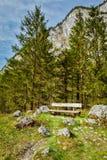 Banco solo en bosque Foto de archivo
