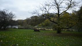 Banco solo en el árbol del AOD del lago del otoño almacen de metraje de vídeo