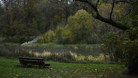 Banco solo en el árbol del AOD del lago del otoño almacen de video