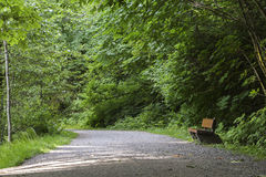 Banco solo su Forest Path Fotografia Stock Libera da Diritti