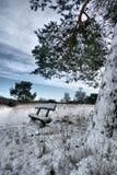 banco sotto l'albero in dicembre Fotografia Stock Libera da Diritti