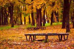 Banco sotto le foglie Immagini Stock