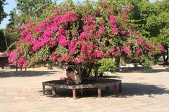 Banco sotto un albero con i fiori immagine stock libera da diritti