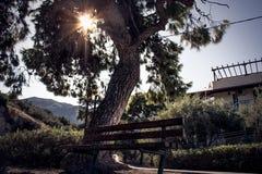 Banco sotto un grande albero fotografie stock libere da diritti