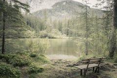 Banco sozinho na floresta e no lago naturais nas montanhas imagem de stock royalty free