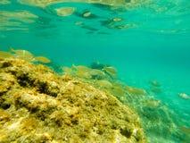 Banco subacqueo dei pesci fotografia stock libera da diritti