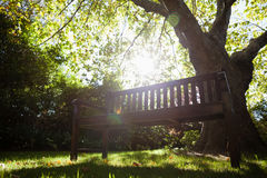 Banco vacío contra árboles en campo en patio trasero Imagen de archivo