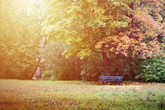 Banco vacío en bosque del otoño Foto de archivo