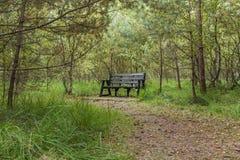 Banco vacío solitario dentro de un bosque verde Fotos de archivo libres de regalías