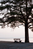 Banco vazio e silhueta grande da árvore fotografia de stock royalty free