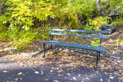 Banco verde em Central Park fotografia de stock royalty free