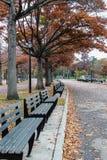 Banco verde en parque Fotografía de archivo libre de regalías