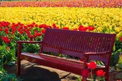 Banco vermelho entre campos do tulip Foto de Stock Royalty Free
