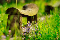 Banco viejo con el fondo verde de la naturaleza, con la rama y f violeta Imagenes de archivo