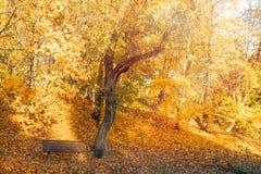 Banco vuoto sotto gli alberi autunnali fotografia stock