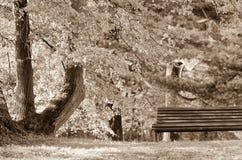 Banco vuoto sulla riva del lago Immagine di solitudine, ma anche di pace immagini stock libere da diritti