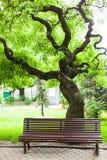 Banco y árbol de parque Foto de archivo