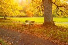 Banco y árbol en un parque Foto de archivo libre de regalías
