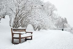 Banco y árboles de parque en invierno Fotografía de archivo