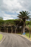Banco y camino azules en los jardines del palacio de Magdalena Foto de archivo