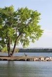 Banco y árbol del lago silence Foto de archivo libre de regalías