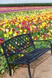 Banco y tulipanes Imagen de archivo libre de regalías