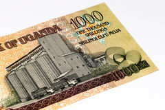 Banconota di valuta dell'Africa Fotografie Stock Libere da Diritti
