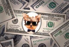 Banconota in dollari artistica con presidente del cane Fotografia Stock Libera da Diritti