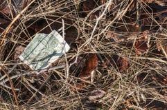 Banconota in dollari lacerata Fotografia Stock Libera da Diritti