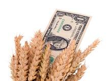 Banconota matura dei contanti del dollaro degli S.U.A. delle orecchie del raccolto del grano Fotografie Stock