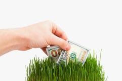 Banconota in un'erba Immagini Stock