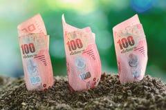 Banconota, una valuta tailandese di 100 baht che cresce dal suolo contro l'offuscamento Fotografie Stock