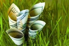 Banconote in dollari che crescono nell'erba verde Fotografia Stock