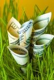 Banconote in dollari fra erba verde Fotografia Stock Libera da Diritti