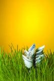 Banconote in dollari fra erba verde Immagini Stock Libere da Diritti