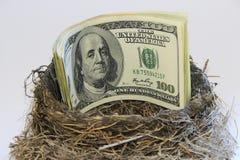Banconote in dollari in un nido dell'uccello Immagini Stock