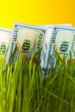 Banconote in dollari una fra erba verde Fotografia Stock