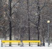 Bancos amarillos en parque del invierno Imagenes de archivo